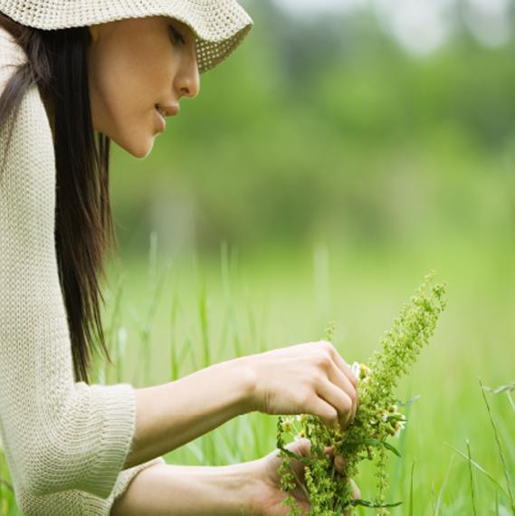 Picking Herbs 569x570